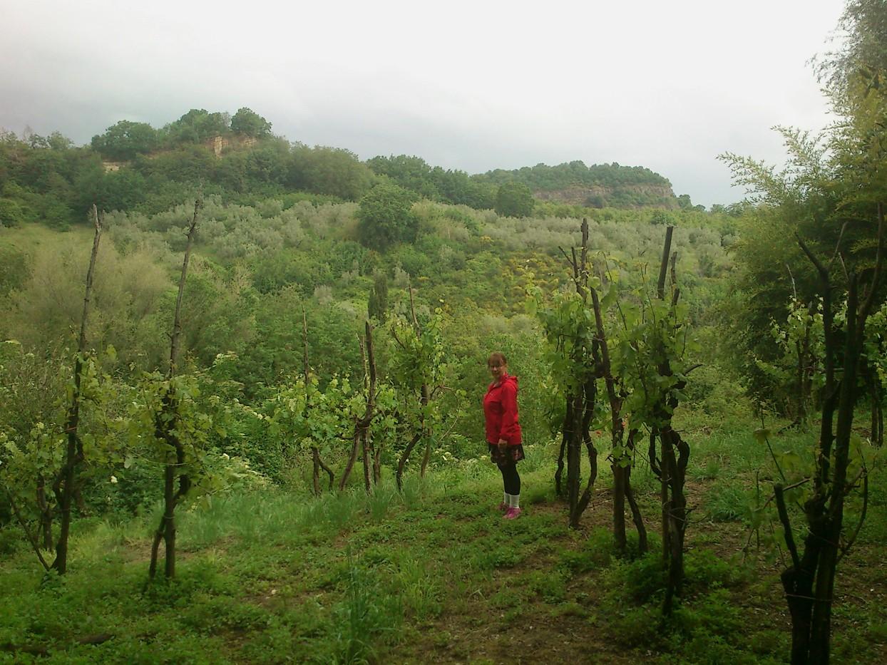 I en vinmark nær Sorgente. (fotograferet af Martin)